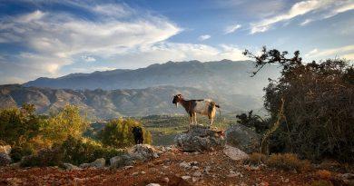 Kreta czyli wyspa Greka Zorby